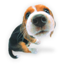 10-puppy1icon.png