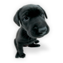 11-puppy2icon.png