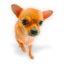 12-puppy3icon.png